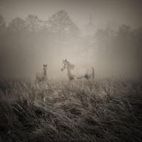Unspoken silence by Alshain4
