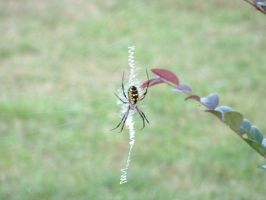 The not so itsy bitsy  spider by Freaky4life911