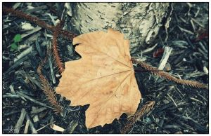 Fall's End by IgniteImagery