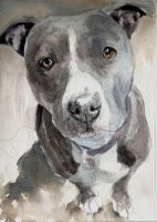 Gray Bully by Pickleweasels