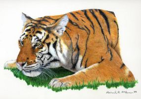Crouching Tiger by mclanesmemories