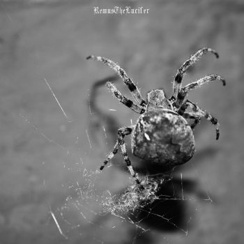 Spider III by RemusTheLucifer