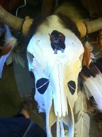 painted buffalo skull by dancingkatz1