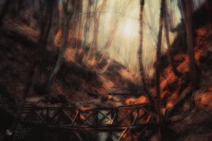 place to hide by ildiko-neer
