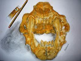 Golden Lion Skull by AerysSketches