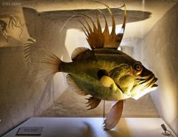 Fish Sculpture by J222R