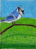 Blue Jay in Pastel 1 by Mel-at-ne