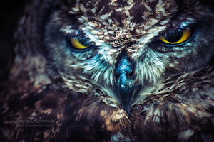 Owlie by TammyPhotography