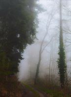Lost in the Woods VI v2.0 by Aenea-Jones