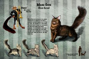 Maine Coon Orthographic Study by MasterpieceLost