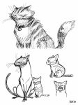 Cats and Kitten by BMalley