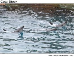 Dolphins 24 by Ceta-Stock