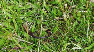 common lizard by frogslave69