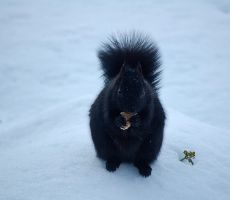 squirrel 3125 by loveandtears