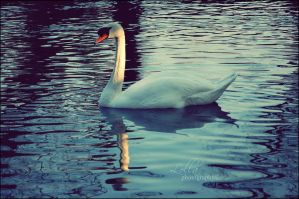 White Swan by L0LLA