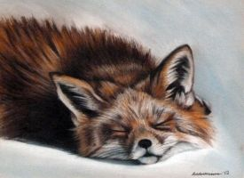 Sleeping Fox by tonyarama