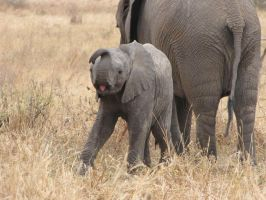 Baby Elephant by shiblets