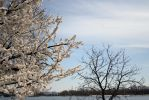 Apple trees in bloom stock #11 by croicroga