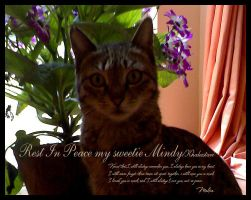 Rest In Peace my sweetie Mindy by demeters