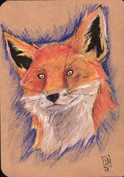 Small-Eyed Fox by pinaypenciler