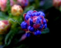 Blue and purple ball by Jules-one