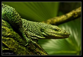 Monitor Lizard. by mym8rick