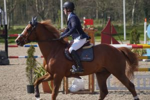 Chestnut Horse - Show Jumping stock - 11.10 by MagicLecktra