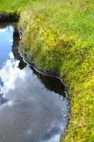 Moss Reflections by BuuckPhotography