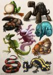 Reptiles and Amphibians by Ruth-Tay