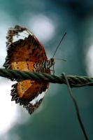 Butterfly I by camillalie