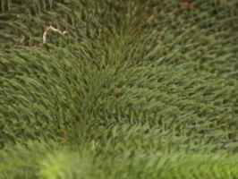 Texture- Natural 03 by texture-resources