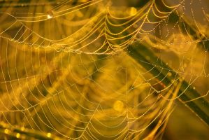 Web by DeingeL