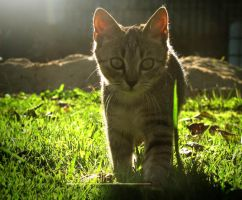Afternoon Kitty by Andenne