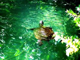 A turtle by gzacharioudakis