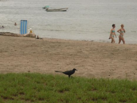 Bird at the beach by SuAlmont