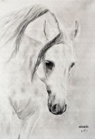 white horse by aixado