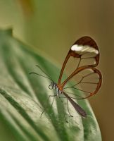 Butterfly Stock 11 by NellyGraceNG