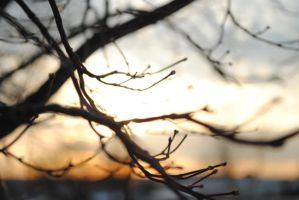 Branches by breakeric