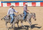Zebras at the Camel Races140906-101 by MartinGollery
