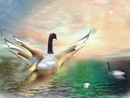 swan 2011 by philsh