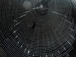 spider web texture 1 by RachgracehStock