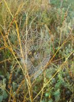 Cobwebs in the fog 5 by Philosopher-Vinni