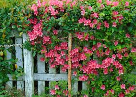White Picket Fence by Calypso1977
