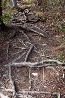 More roots by LucieG-Stock