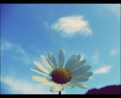 Daisy in the sky by KissOnTheRain
