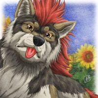 Wolf, Sunflower by SheltieWolf