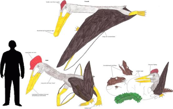 The Leathery-winged Cuckoo by Coelotitan
