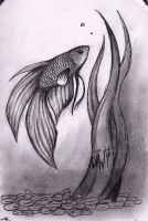 Marylin the Fighting Fish by Eskimo-Evan