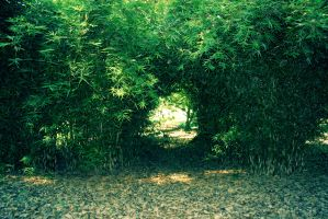 Tree stock - hole in the hedge by CathleenTarawhiti