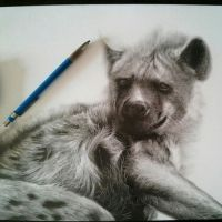 Resting Hyena by chandito